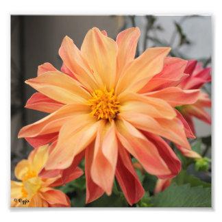 Photo Enlargement - orange flower