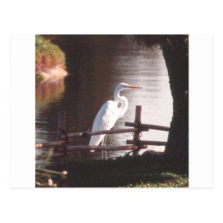 Photo Landscape Postcard