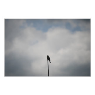 Photo of a Bird