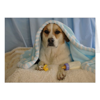 Photo of a dog as a baby boy greeting card
