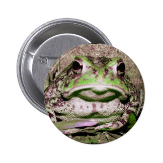 Photo of a funnycolorful fat toad frog pins