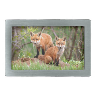 Photo of adorable red fox kits belt buckles