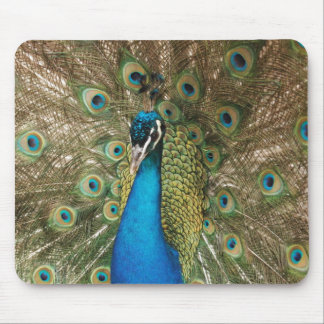Photo of Beautiful Peacock with Spread Feathers Mouse Pad