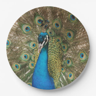 Photo of Beautiful Peacock with Spread Feathers Paper Plate