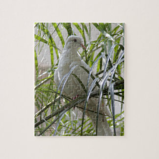 Photo of beautiful white dove puzzles