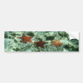 Photo of Belize Starfish Bumper Sticker