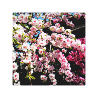 Photo of Cherry Blossoms Wrapped Canvas