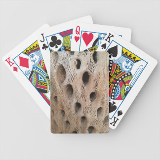 Photo of Cholla Skeleton Bicycle Playing Cards