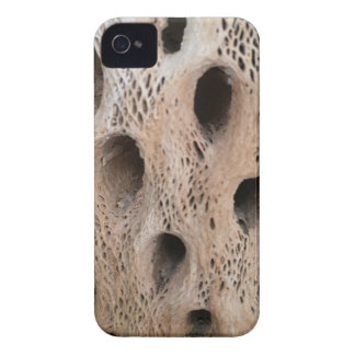 Photo of Cholla Skeleton iPhone 4 Cover