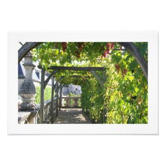 Photo of Grape Arbor at Villandry Palace in France