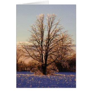 Photo of ice-covered tree card