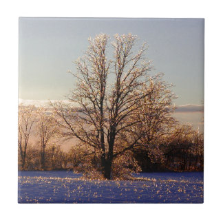 Photo of ice-covered tree small square tile