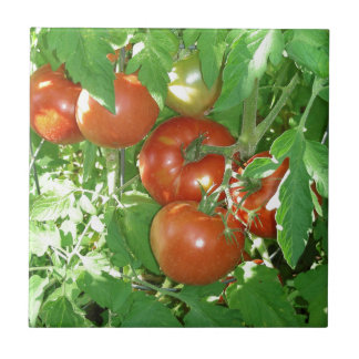 Photo of ripe red tomatoes on the vine ceramic tile