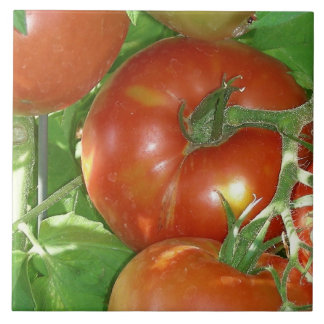 Photo of ripe tomatoes on the vine tile