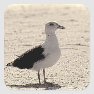 Photo of Seagull on Coney Island Beach Square Sticker