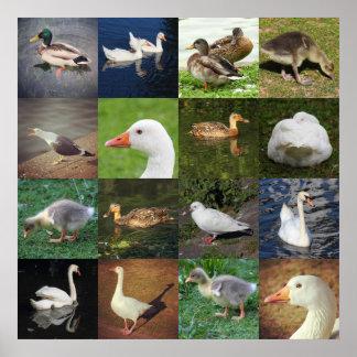 Photo Patchwork - Birds Poster