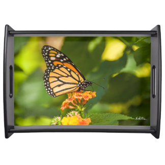 Photo plate of a butterfly serving tray