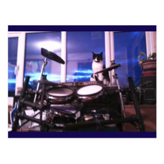 Photo Postcard 12 Blues Drummer Cat Animal Beauty