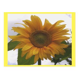 Photo Postcard 7 Sunflower - Natural Beauty