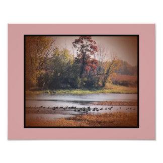 Photo Print 11x14 Canada Geese in Autumn
