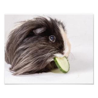 Photo print cute guinea pig eating cucumber