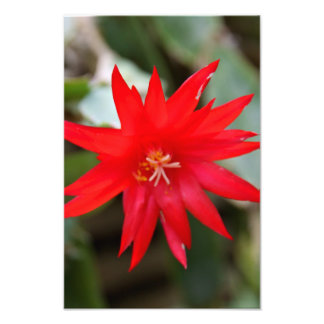Photo Print - Easter Cactus