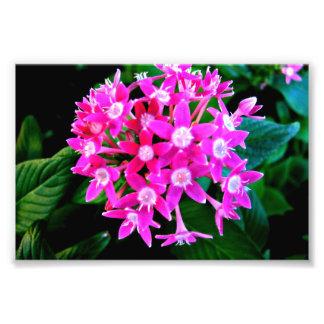 Photo Print Of Beautiful Pink Flowers