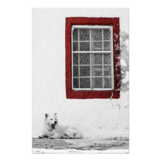 Photo Print - Yawning White Dog on Santorini
