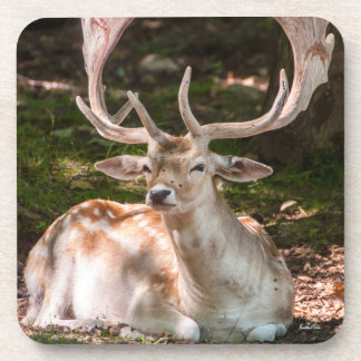photo stag under wood coaster
