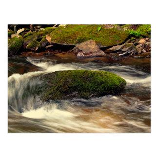 Photo Taken at Fires Creek in North Carolina Postcard
