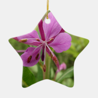 Photo taken by CarlyLouPhotography in Lincolnshire Ceramic Star Decoration