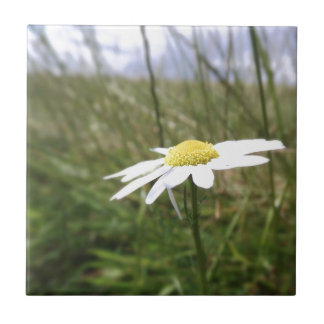 Photo taken by CarlyLouPhotography in Lincolnshire Small Square Tile