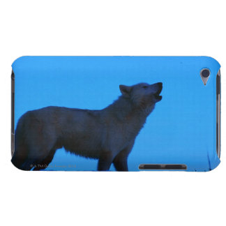 Photo, white wolf howling at night, Color, High iPod Touch Case