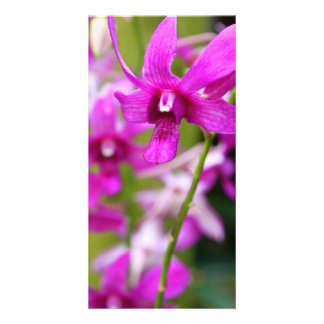 Photocard - Cooktown Orchid Photo Card