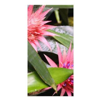 Photocard - Miltassia Orchid Photo Card