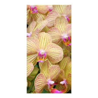 Photocard - Moth Orchid Photo Card