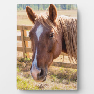 Photograph of a Horse in the Sunlight on a Farm Display Plaques