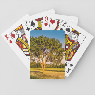 photograph of a tree in fields playing cards