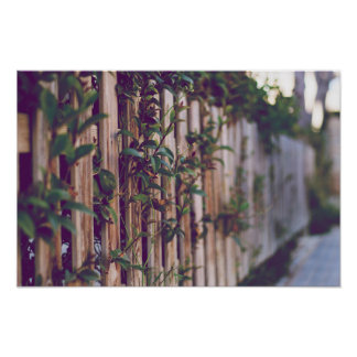 Photography details fence with flowers poster