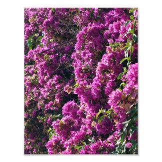 Photography flowers lilacs photo print