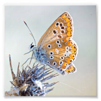 Photography of butterfly on flower of the desert art photo