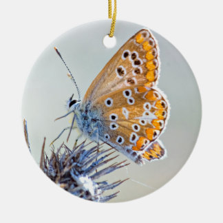 Photography of butterfly on flower of the desert round ceramic decoration