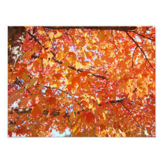 Photography prints gifts Autumn Leaves Nature Art Photo