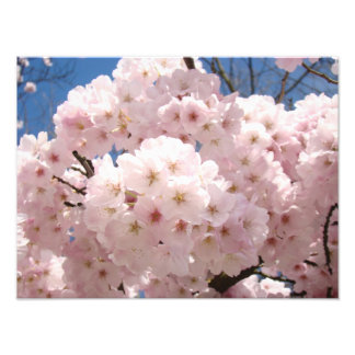 Photography prints nature Pink Tree Blossoms Photographic Print