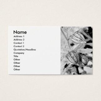 Physalis angulata business card