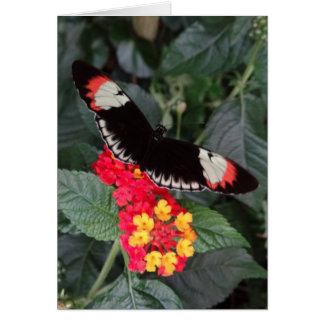 Piano Key Butterfly Notecard