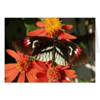 Piano Key Butterfly on Orange flower Greeting Card
