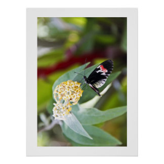 Piano Key Butterfly Posters