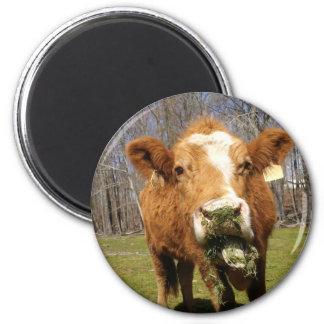 Picture 001 6 cm round magnet
