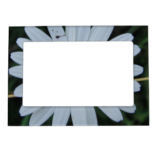 Picture frame white daisy bloom on Stäbchen Photo Frame Magnets